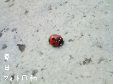 20100118125328 てんとう虫発見!