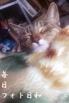 D1000015 寝る猫