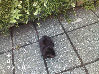 D1006021 週末の大通りを黒猫が歩く