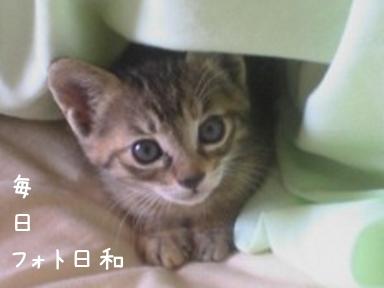 F1000024 猫写真みっけ