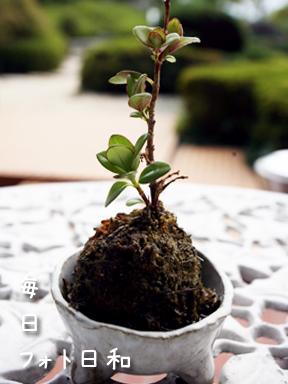 IMG 0046 この木何の木?