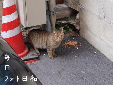 P2220118 野良猫