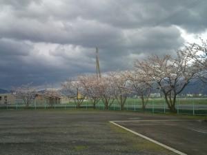 F1000399 300x225 桜が咲きましたね。