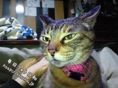 DSC 0016 384x288 2月22日なので猫です。