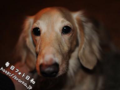 DSC 4046 384x288 実家の犬猫