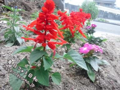 DSC 0222 384x288 自宅に花壇が。