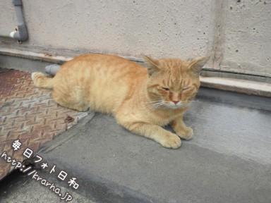 DSC 0241 384x288 銀天街の野良猫