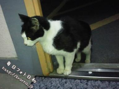 野良猫がアパートに侵入