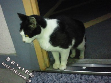 DSC 0255 384x288 野良猫に侵略されてます。