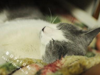 DSC 7000 384x288 以前撮った猫の写真が出てきた。